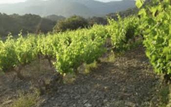 vigne drôme